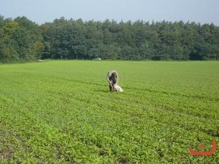 Hundetag 2011