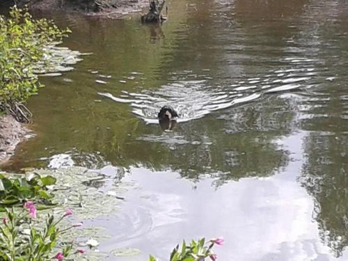 Hundeübungstag am Gewässer 2015